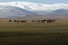 Plans for dry coal handling unit in Mongolia scrapped