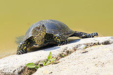 BHP Billiton recognises turtle protection project